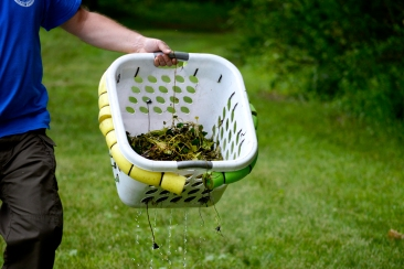 Jeff Diers hauls a basket of pulled water chestnuts out of the lake. Diers is vice-chairman of the Conewango Creek Watershed Association and a research scientist at Fredonia. He also works with Chautauqua County and surrounding communities to maintain a balanced ecosystem.