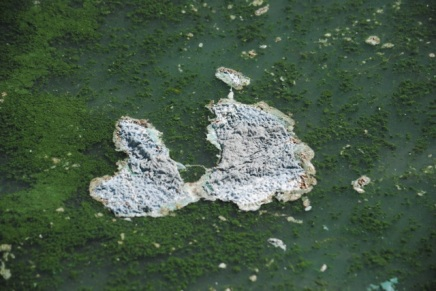 Chagnon to address solutions to harmful algal blooms in Lake Walk